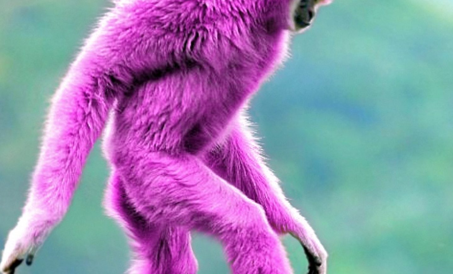 Don't think of a pink monkey. Don't think of a pink monkey. Don't think of a pink monkey.