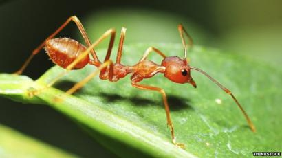 This Ant Was Twice Ant Of The Year, But Does This Ant Deserve A Place In The Ant Hall Of Fame?