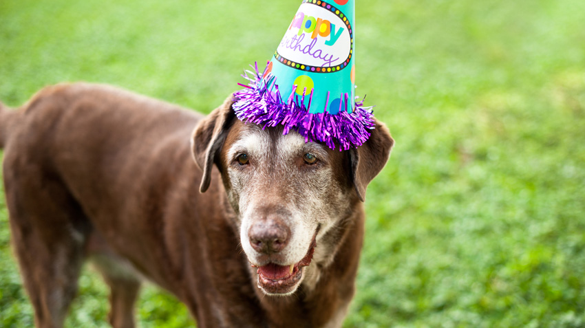Quiz: It's Your Dog's Birthday! Can You Get Him A Present That Won't Disappoint?